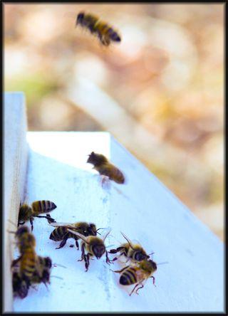 Bees copy