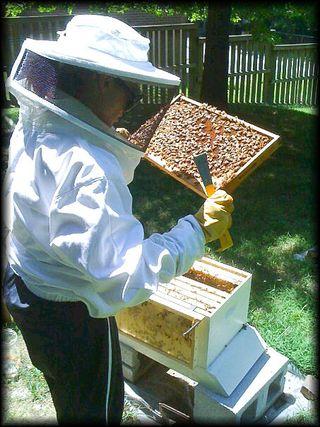 Beekeeping copy copy